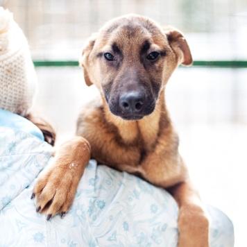 Спартак - Собаки в добрые руки