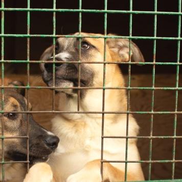 Балтимор - Собаки в добрые руки