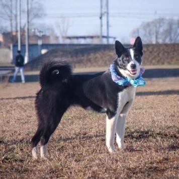 Шейла - Найденные собаки