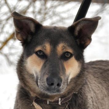 Пегги - Собаки в добрые руки