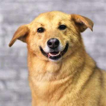 Бетта - Собаки в добрые руки