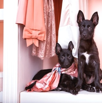 Рене и Меган - Собаки в добрые руки