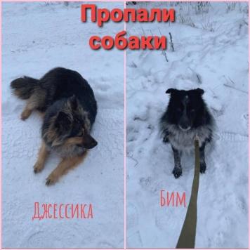 Джессика и Бим - Пропавшие собаки