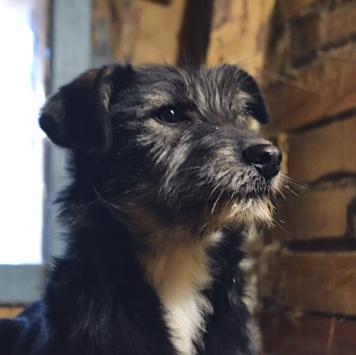 Мальта и Дар - Собаки в добрые руки
