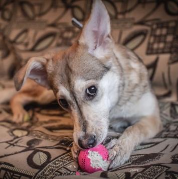 Валюха - Собаки в добрые руки