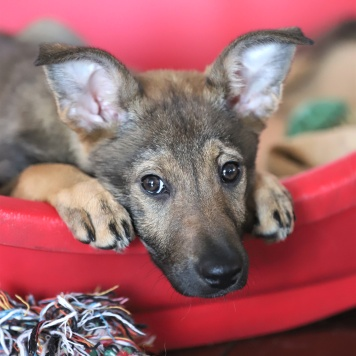 Глаша - Собаки в добрые руки