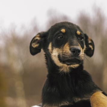 Кирюша - Собаки в добрые руки