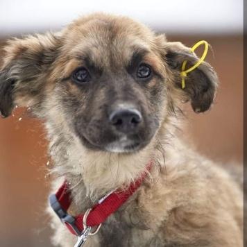 Фасолька - Собаки в добрые руки