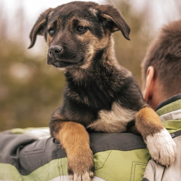 Ася - Собаки в добрые руки