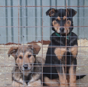Дэнни и дамка - Собаки в добрые руки