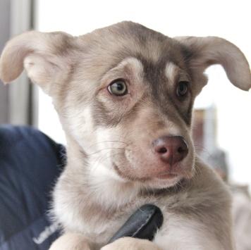 Ави - Собаки в добрые руки