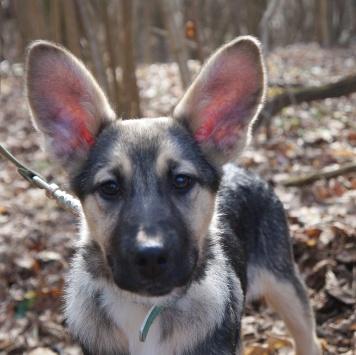 Регата - Собаки в добрые руки