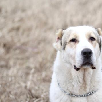 Узра - Собаки в добрые руки