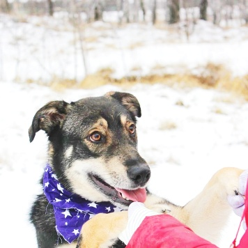 Бонька - Собаки в добрые руки