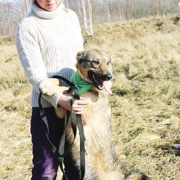 Томми - Собаки в добрые руки
