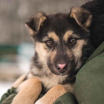 Кими - Собаки в добрые руки
