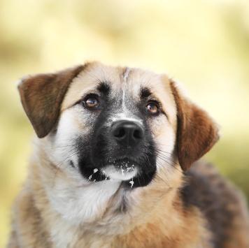 Ириша - Собаки в добрые руки