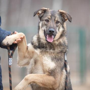 Шери - Собаки в добрые руки
