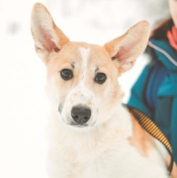 Сэнди - Собаки в добрые руки