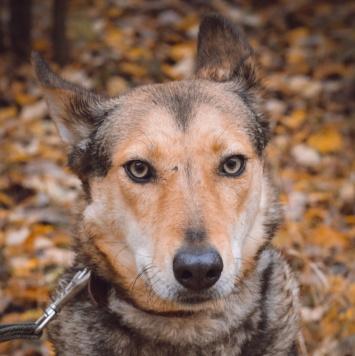 Астрид - Собаки в добрые руки