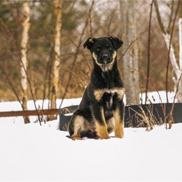 Веня и Ассоль - Собаки в добрые руки