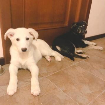 Малыши - Собаки в добрые руки