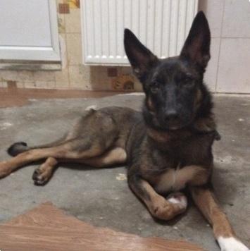 Гретта - Найденные собаки