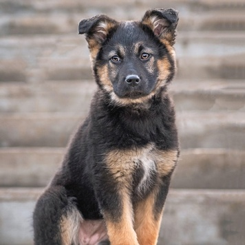 Шерилл - Собаки в добрые руки