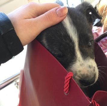 Мерин - Собаки в добрые руки
