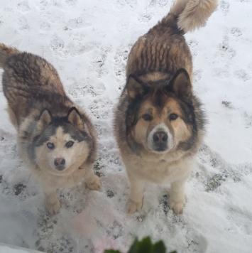 Снежа и Кабачек - Собаки в добрые руки