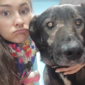 Гурд - Собаки в добрые руки
