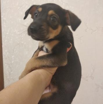 Лолли - Собаки в добрые руки