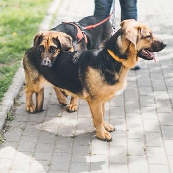 Адель и Лада - Собаки в добрые руки