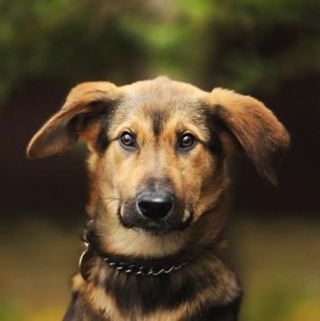 Стич - Собаки в добрые руки