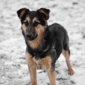 Лайси - Собаки в добрые руки