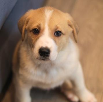 Холенный Бутус - Собаки в добрые руки