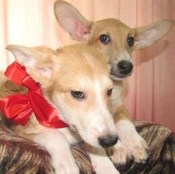 Фенечка и Джокер - Собаки в добрые руки