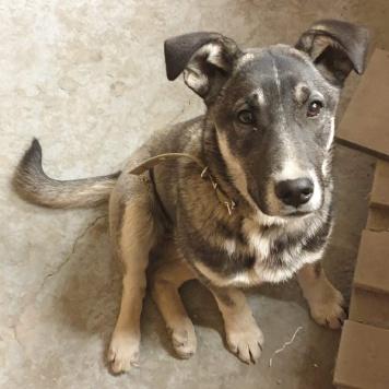 Палаша - Собаки в добрые руки