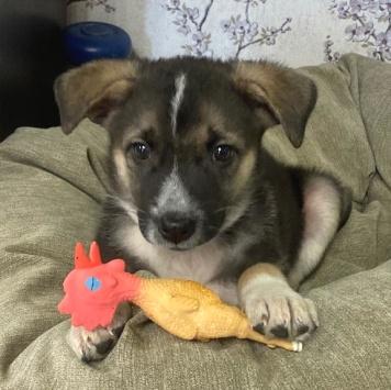 Джессика - Собаки в добрые руки