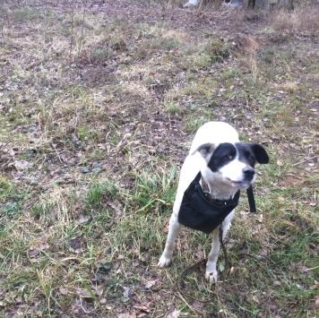 Noname - Найденные собаки