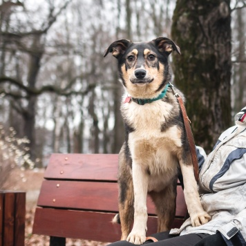 Лесли - Собаки в добрые руки