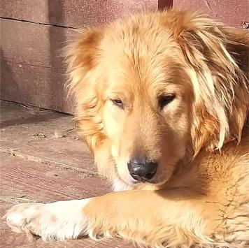Дарий - Собаки в добрые руки