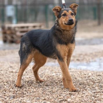 Габри - Собаки в добрые руки