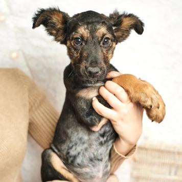 Кайла - Собаки в добрые руки