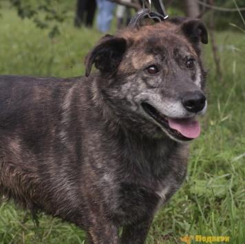 Стелла - Собаки в добрые руки