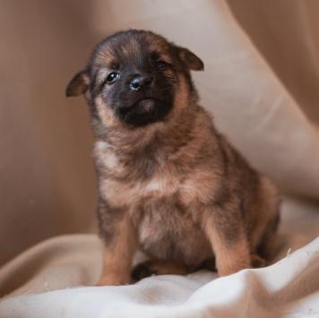 Слиппи - Собаки в добрые руки
