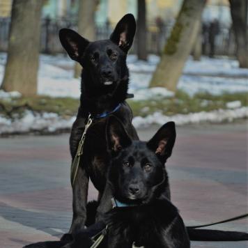 Деми и Бетти - Собаки в добрые руки