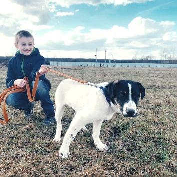 Коба - Собаки в добрые руки