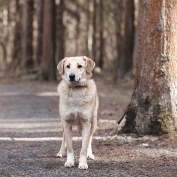 Мартин - Собаки в добрые руки