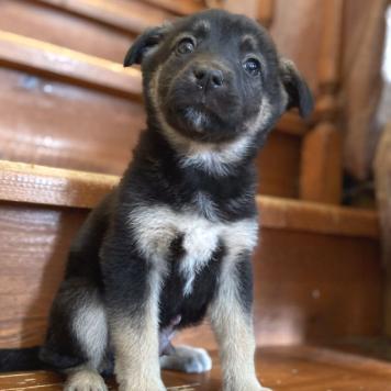 Щенок Мальчик - Собаки в добрые руки